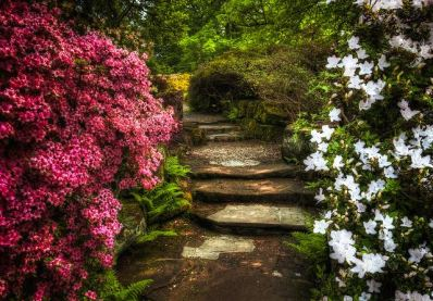 Flowers and Garden Path