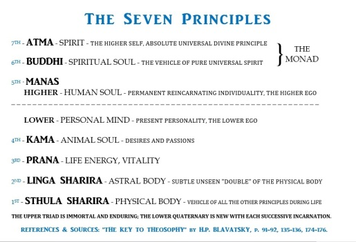 siete principios
